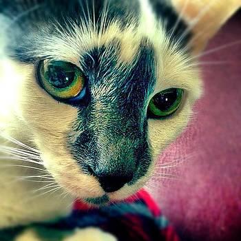 Cat Eyes by Kim Kay