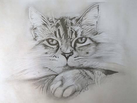 Cat I. by Paula Steffensen
