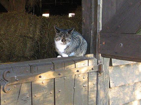 Cat in Barn by Leontine Vandermeer