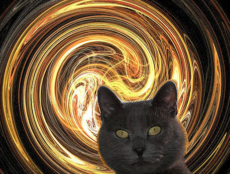 Cat in spiral of life by Zsuzsa Balla