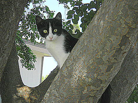Cat in the tree by Rosa Shannon