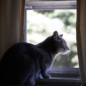 Cat Looking Out Window by Unknown