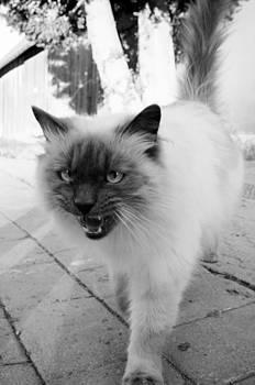 Cat by Matthias Hauser