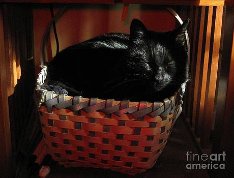 Cat Nap by Donna Renier