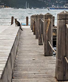 Kantilal Patel - Cat on Bosporus Wharf