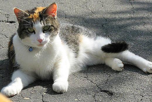 Cat on street by Leontine Vandermeer