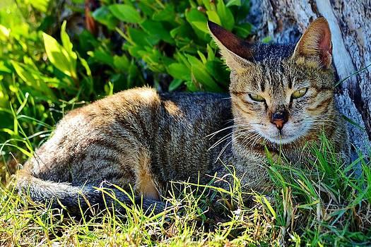 Cat Relaxing by Ahmed Moustafa