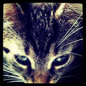 #cat #sun by Tina Marie