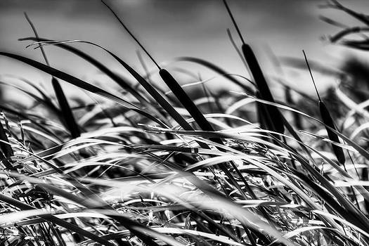 Cat Tails Black and White by Stuart Deacon
