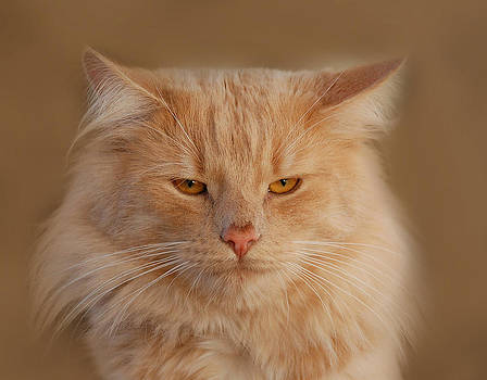 Waldek Dabrowski - cat