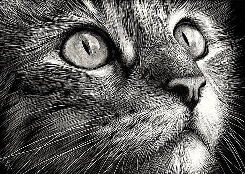 Cat's face by Elena Kolotusha