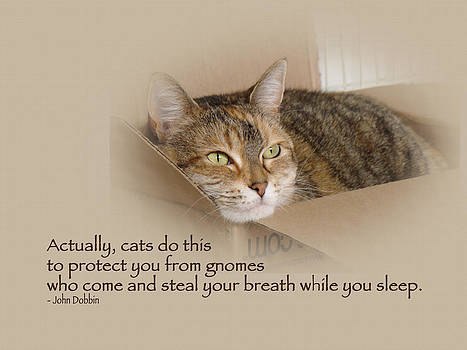 Mother Nature - Cats Protecting You From Gnomes - Lily the Cat