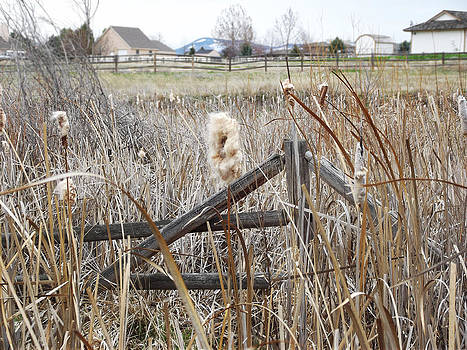 Cattail Fence 2 by Robin Hewitt