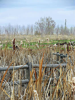 Cattail Fence by Robin Hewitt