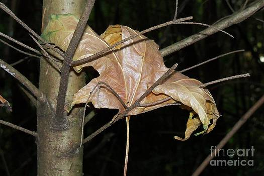 Caught in Fall by Laurel Thomson