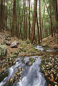 Cedar Forest - Tilghman's Ravine - New Jersey by Phil Degginger