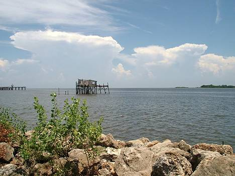 Cedar Key Florida by Cindy Carr