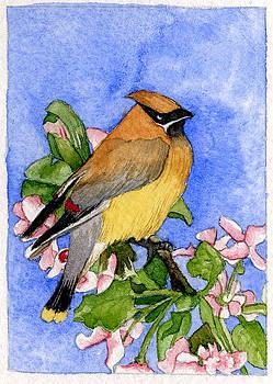 Cedar waxwing in spring by Eunice Olson