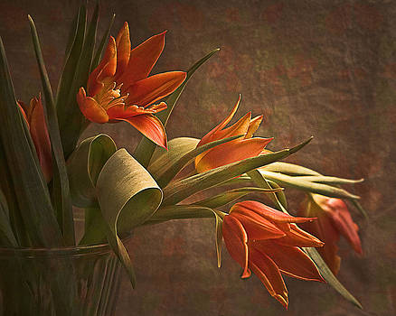 Center Stage Tulips by Jill Balsam