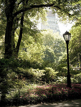 Central Park  by Darren Martin