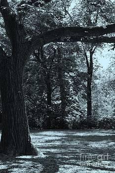 Sophie Vigneault - Central Park New York