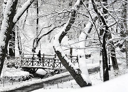 Central Park Winter 1 by Frank McAdam