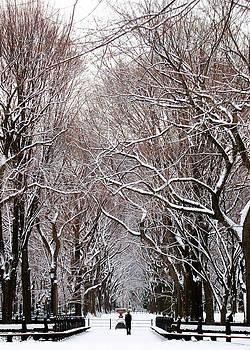 Central Park Winter 3 by Frank McAdam