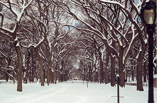 Central Park Winter by Andrea Lucas