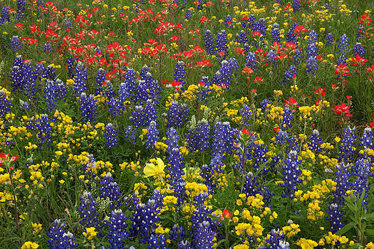 Susan Rovira - Central Texas Mix