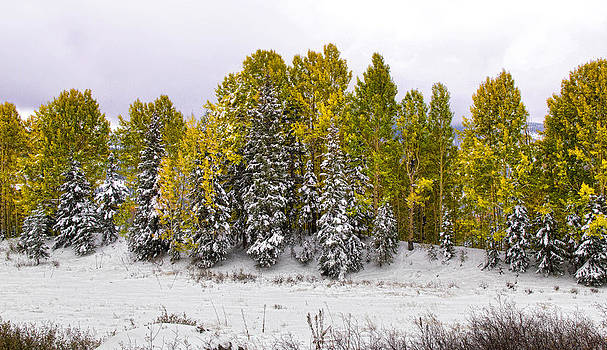 Nathan Mccreery - Changing Aspens   Cumbres Pass