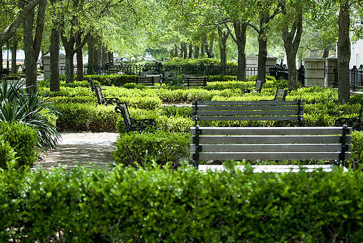 Charleston Benches by Laurianna Murray