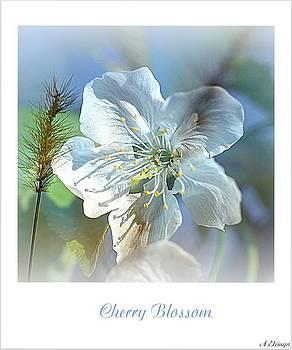 Cherry Blossom by Alexander Elzinga