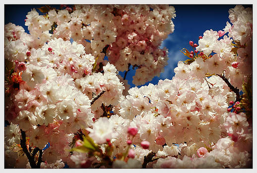Cherry Blossom Bliss by Martha Hughes