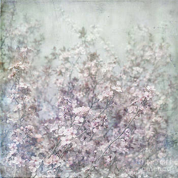 Cherry Blossom Grunge by Paul Grand