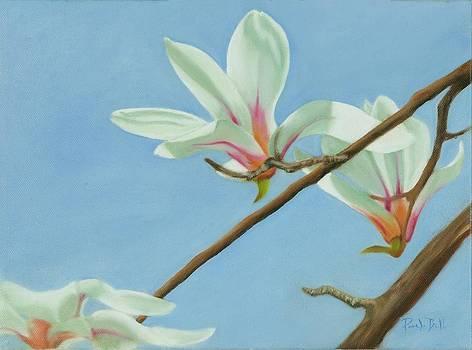 Cherry Blossom II by Pamela Bell