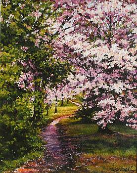 Cherry blossom path by Cherie Sikking