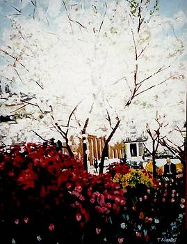 Cherry Blossom Trees in Macon Ga by Terry Forrest