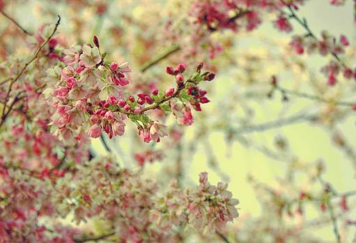 Cherry Blossoms by Cathie Tyler