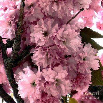 Dale   Ford - Cherry Blossoms