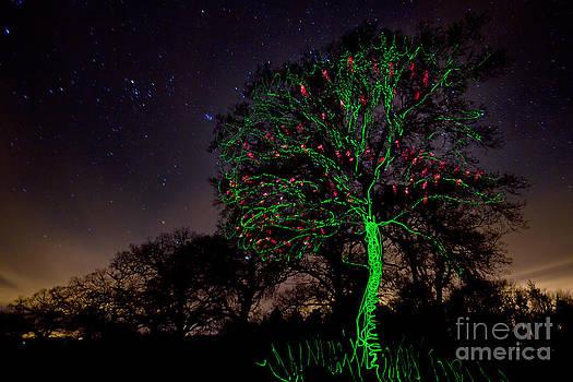Angel  Tarantella - cherry tree