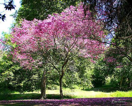 Diana Haronis - Cherry Tree
