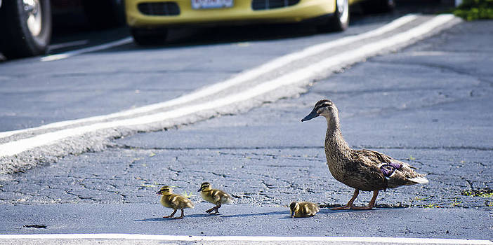 Chick Xing by Andrew Kubica