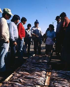 Chilean Fish For Sale by Thomas D McManus