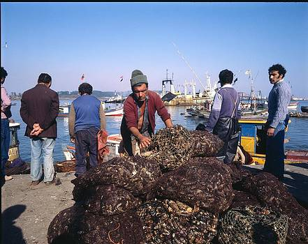 Chilean Mussels For Sale  by Thomas D McManus