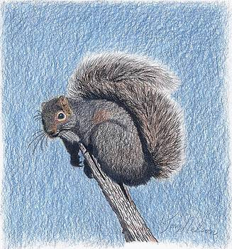 Chillin Squirrel by Tony  Nelson