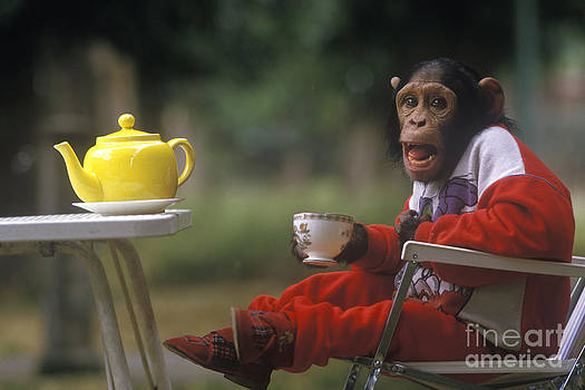 Homer Sykes - CHIMP LET HAVE TEA