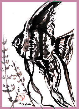 Chinese Angel Fish by M c Sturman