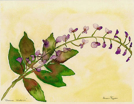 Chinese Wisteria by Susan Risse
