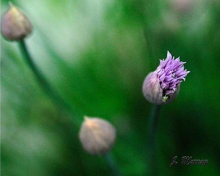 Chives by Jessica J Murray