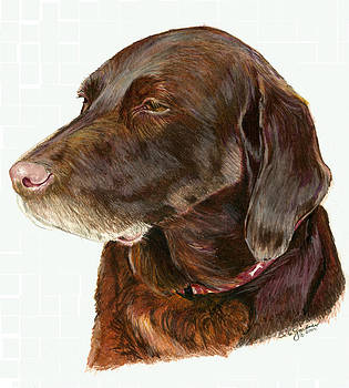 Chocolate Labrador by Deb Gardner